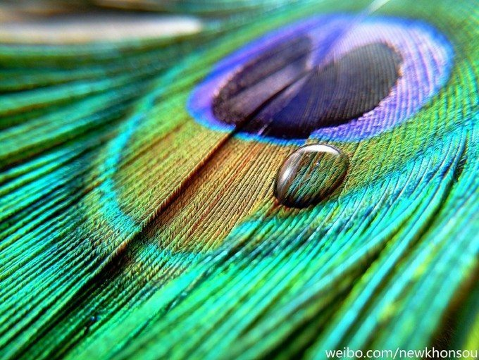 Meizu-MX6-Peacock