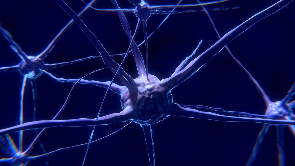 Neurón