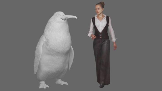 Na Novom Zélande objavili kosti tučniaka veľkého ako človek