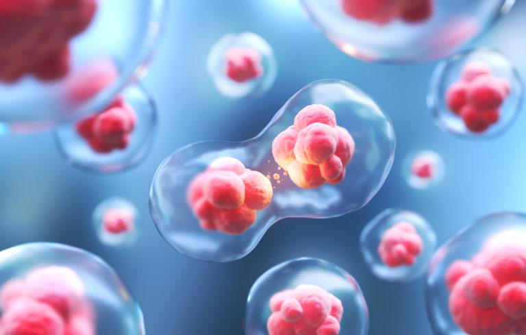 Ľudské bunky rástli v opičích embryách a ľudsko-opičia chiméra žila rekordný počet dní, vedci varujú pred etickým problémom